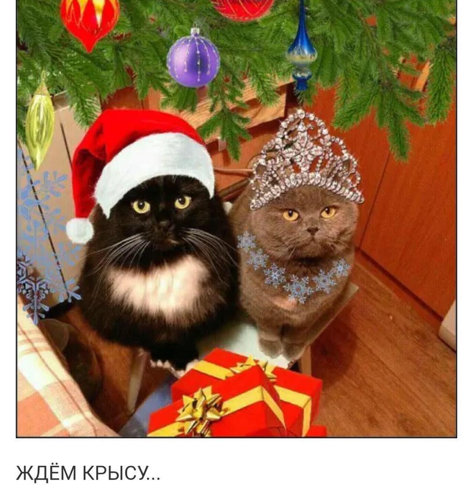 Ветеринарная клиника Vetuchastok.ru